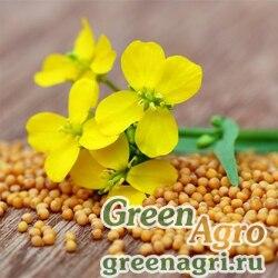 Сидераты Горчица желтая в мешках 25кг (цена за мешок) Зеленый уголок
