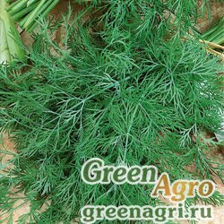 Семена Укроп Обильнолистный (упак-50 гр.)