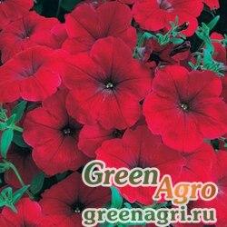 "Петуния многоцветковая (Petunia multiflora) ""Celebrity F1"" (red morn) raw 250 шт."