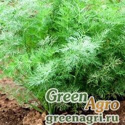 Семена Укроп Аллигатор (упак-50 гр.)