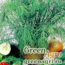 Семена Укроп Аврора (упак-50 гр.)