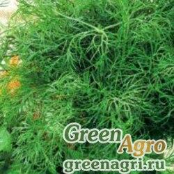 Семена Укроп Геркулес (упак-50 гр.)