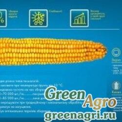 Семена Кукуруза, ДКС 2960, 1 п.е., Monsanto