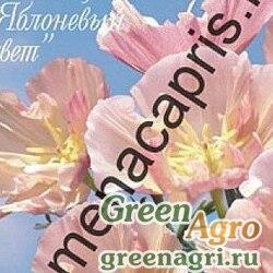 К Эшшольция Яблоневый цвет (Германия) Каприс