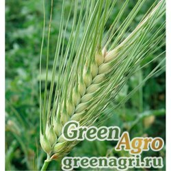 Ячмень 5 кг Зеленый уголок