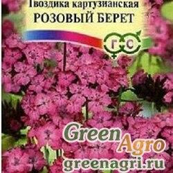 Гвоздика Картузианская Розовый берет Гавриш Ц