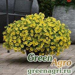 """Калибрахоа гибридная ампельная (Calibrachoa hybrida) """"Kabloom"""" (yellow) pelleted 100 шт."""
