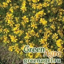"Семена Гелениум горький (Helenium amarum) ""Dakota Gold"" multi-pelleted 1000 шт."