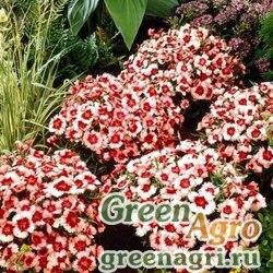 "Гвоздика китайская (Dianthus chinensis) ""Super Parfait F1"" (strawberry) pelleted 1000 шт."