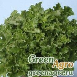"""Гейхера гибридная (Heuchera hybrida) """"Mlalachite"""" (green) Pelleted 1000 шт."""