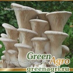 Мицелий (гель) на палочках Белый степной гриб (15шт)