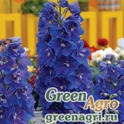 """Дельфиниум высокий (Delphinium elatum) """"Guardian F1"""" (blue) raw 100 шт."""