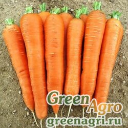 Морковь Курода Пауэр 50 гр.