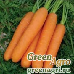 Морковь Нанте (банка-500гр) (фракция 1,4-1,8мм)