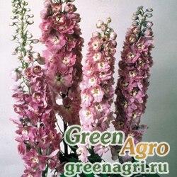 "Дельфиниум высокий (Delphinium elatum) ""Magic Fountains"" (lilac pink with white bee) raw 1000 шт."