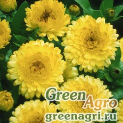 "Календула лекарственная (Calendula officinalis) ""Bon Bon"" (light yellow) Raw 1000 шт."
