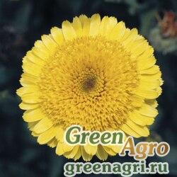 """Календула лекарственная (Calendula officinalis) """"Princess"""" (golden) raw 1000 шт."""