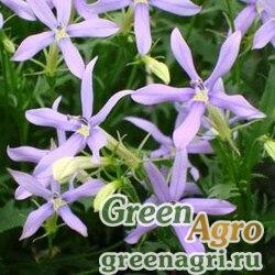 Изотома гибридная Isotoma hybrida TRISTAR BLUE SKY Pelleted 1000