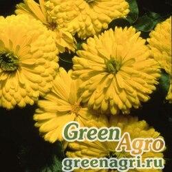 "Календула лекарственная (Calendula officinalis) ""Bon Bon"" (yellow) raw 1000 шт."