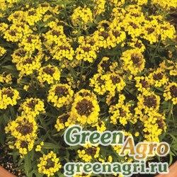 """Желтушник гибридный (Erysimum hybridum) """"Canaries"""" (yellow) Raw 1000 шт."""