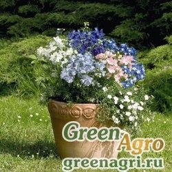 """Дельфиниум крупноцветковый (Delphinium grandiflorum) """"Summer Colors"""" (mix) Raw 1000 шт."""