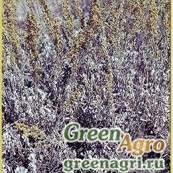 Полынь трехзубчатая (Artemisia tridentata) 40 гр.