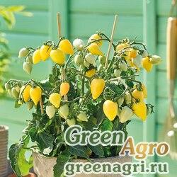 """Томат (Lycopersicon esculentum) """"Plumbrella"""" (creamy-yellow) raw 1000 шт."""