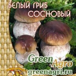 Белый гриб сосновый (60мл.)
