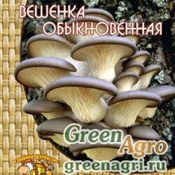 Мицелий Вешенка обыкновенная (12шт.)