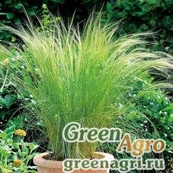 Ковыль тончайший Stripa tenuissima Angel Hair Raw 1000