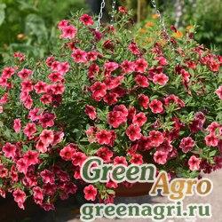 """Калибрахоа гибридная ампельная (Calibrachoa hybrida) """"Crave"""" (strawberry star) pelleted 1000 шт."""