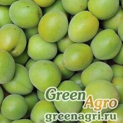 Абрикос японский (Prunus mume) 50 гр.
