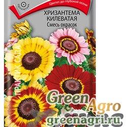 Хризантема Килеватая смесь окрасок Поиск Ц