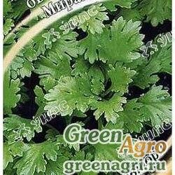 Хризантема овощная Мираж Гавриш Ц (ЗАКАЗ)