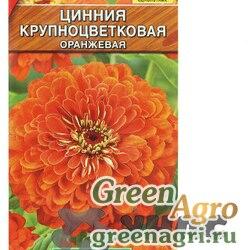 Циния Крупноцветковая оранжевая Аэлита Ц