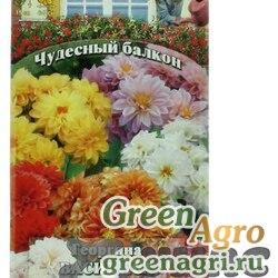 Георгина Василиса (Чудесный балкон) Гавриш Ц