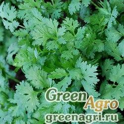 Кориандр овощной Тайга (1уп-50гр)
