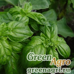 Базилик овощной Тонус (1уп-50гр)