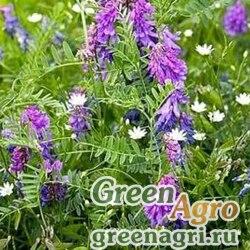 Смесь сидератов для отдыха почвы 1 кг Зеленый уголок (10)