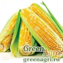 Семена Кукуруза, ДКС 3623, 1 п.е., Monsanto