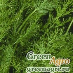 Семена Укроп Геркулес (1уп-1кг)