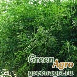 Семена Укроп Аллигатор (1уп-50 гр)