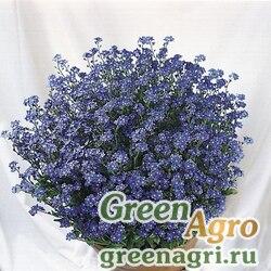 """Незабудка лесная (Myosotis sylvatica) """"Miro"""" (mid-blue) raw 1000 шт."""