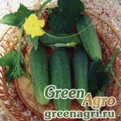 Огурец Драгун F1(1уп-250шт) (инкруст.семена)