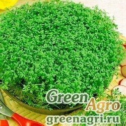 Кресс-салат Дукат (упак-50 гр.)