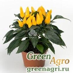 "Перец летний (Capsicum annuum) ""Mambo"" (yellow) raw 1000 шт."