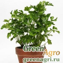Петрушка кудрявая Petroselinum crispum PARSLEY FLAT Multi-pelleted 1000