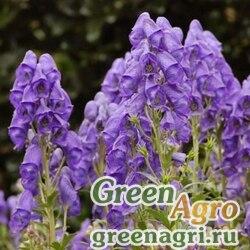 Аконит (Aconitum sp) 2 гр.