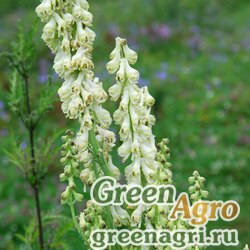 Аконит бородатый (Aconitum barbatum) 4 гр.
