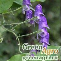 Аконит вьющийся (Aconitum volubile) 5 гр.
